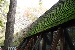 Mossy Roof Before 2
